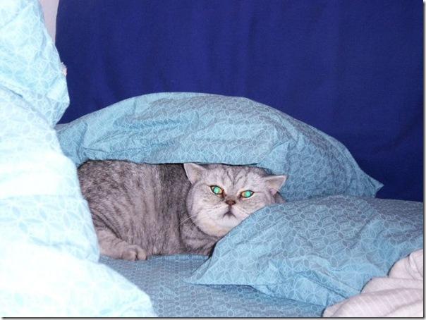 Giuly a gata gorda que ficou famoso na internet (18)