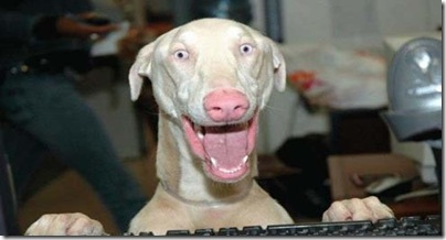 cachorro_engracad