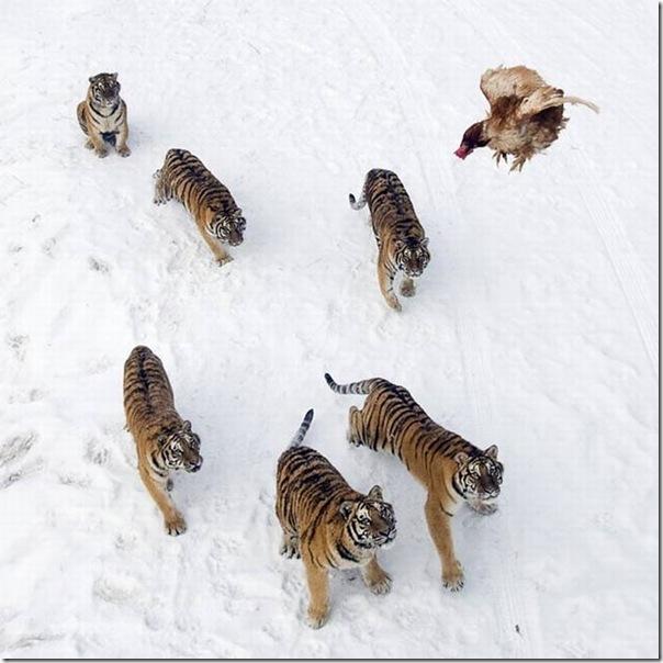 As melhores fotos de animais de 2010 (28)