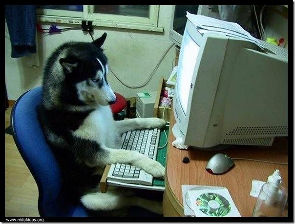 Cão programador