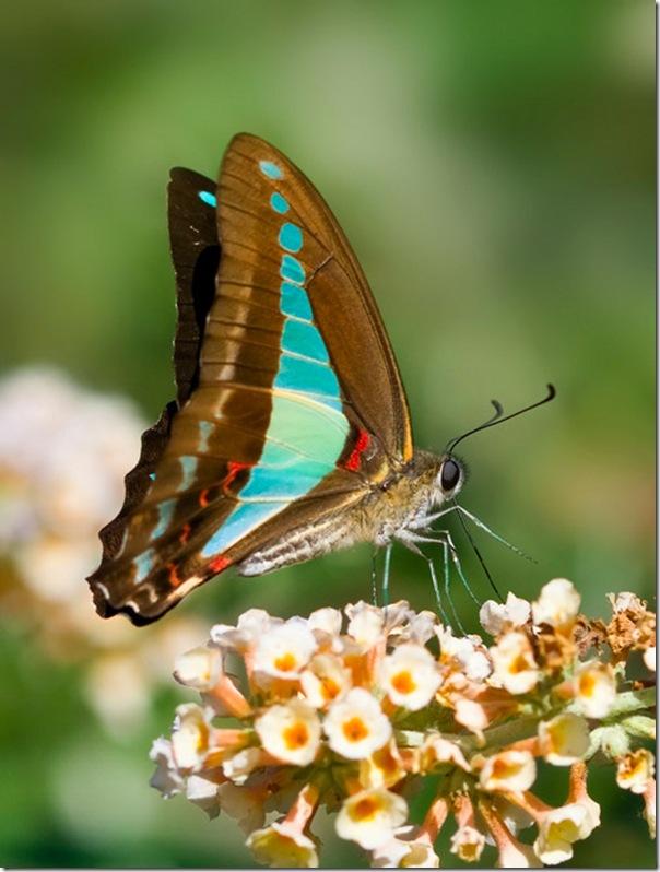 O Pequeno mundo da natureza por Louise Docker (11)
