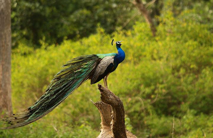 Bird photos: post all your bird photos here