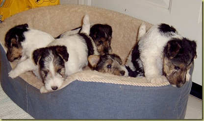 Puppies2003