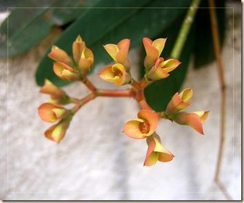 succulentflower