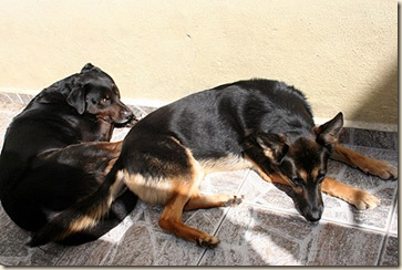 2009-08-02_romany dingo_2798 sm