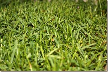 lawn 2