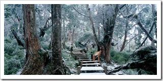 鐵杉林自然步道1