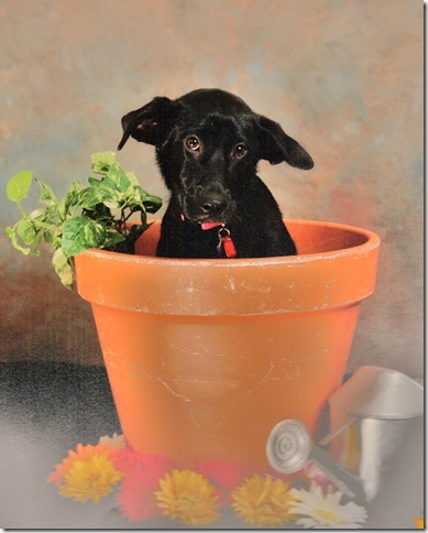 Flower Pot Holly (2)