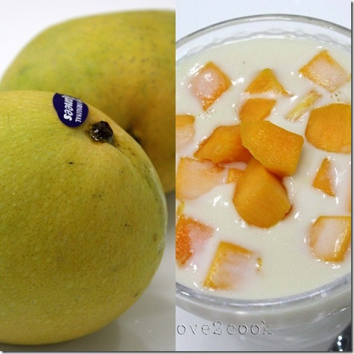 panna cotta mangonew