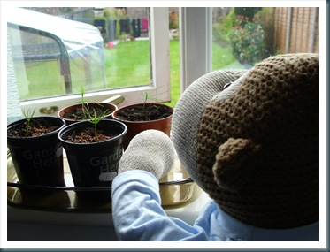 Seedlings on window sill