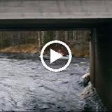 Ukonjoki 2010
