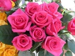 rosas (7)