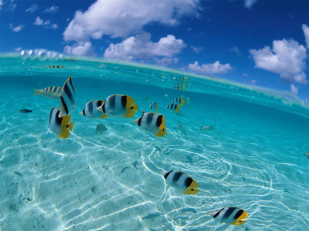Fish InsideSea
