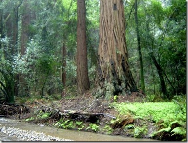 p211852-San_Francisco-Muir_Woods