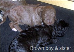 brown_boy_and_sister