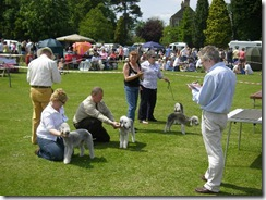 dog_show_northumberland_019