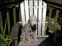 Storey_in_her_deck_chair_(2)