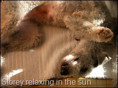 Storey_relaxed_in_the_sun