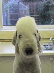 6th Mar 2011 Bailey-Jay trim (18)