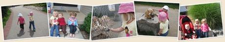 View 2009 African Lion Safari