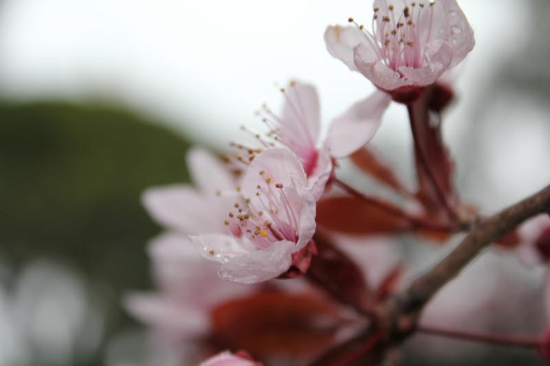 Els ametllers han florit II