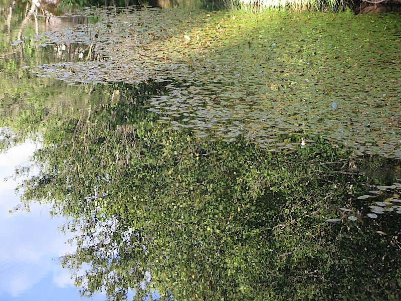 Bosc damunt de l'aigua
