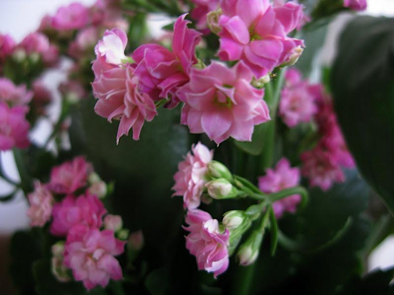 Flors d'interior