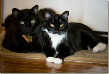 catbuddies