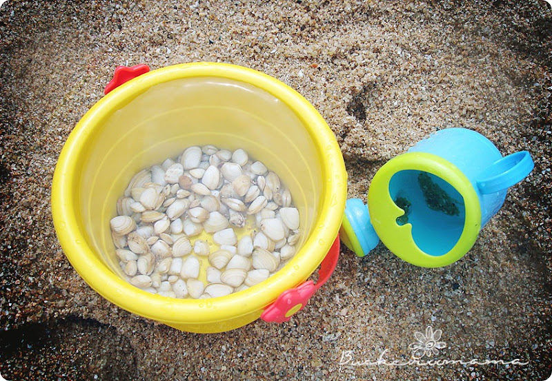 shells-in-yellow-bucket