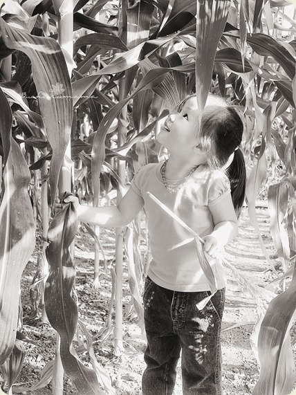 zoe-among-the-corn-1BW