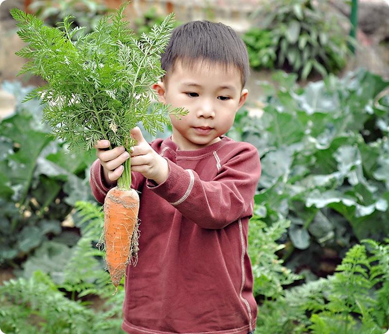 Josh-Carrots