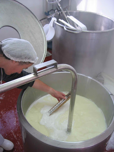 Checking the Whey's Rising Temperature to Make Ricotta, Molise
