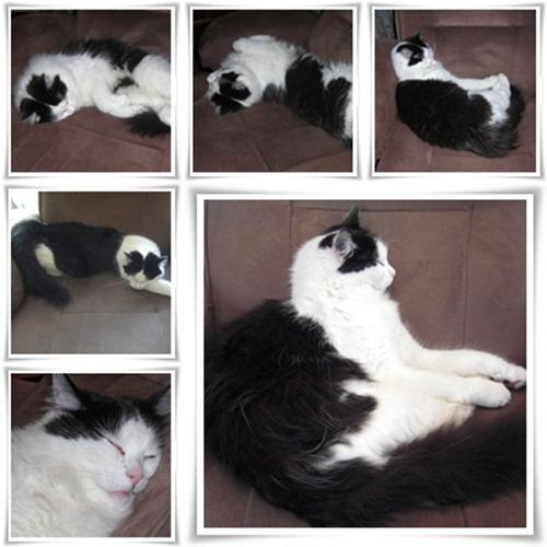 Gilbert sover-