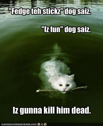 funny-pictures-cat-will-kill-dog