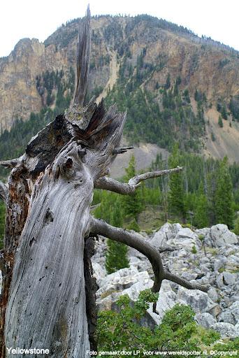 012 Yellowstone.JPG