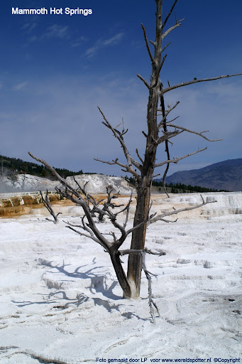 07  Yellowstone Mammoth Hot Springs.JPG