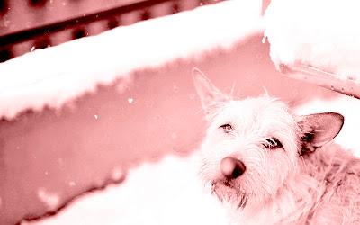 alai al balcó nevant