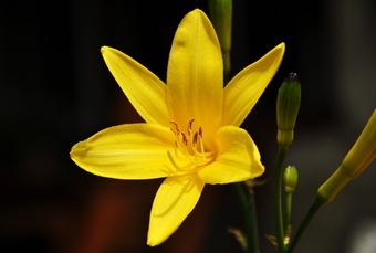 blommagul1