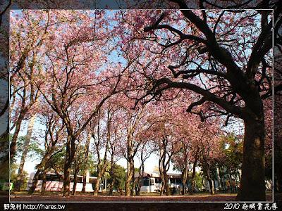 [台南] 2010府城賞花季