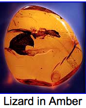 lizard in amber.jpg