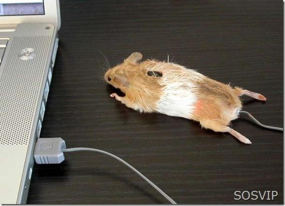 Mouse Diferentes (7)