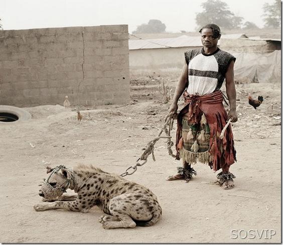 Passeio animal estimacao (6)