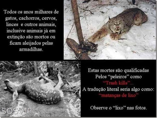 Maus tratos animais (2)