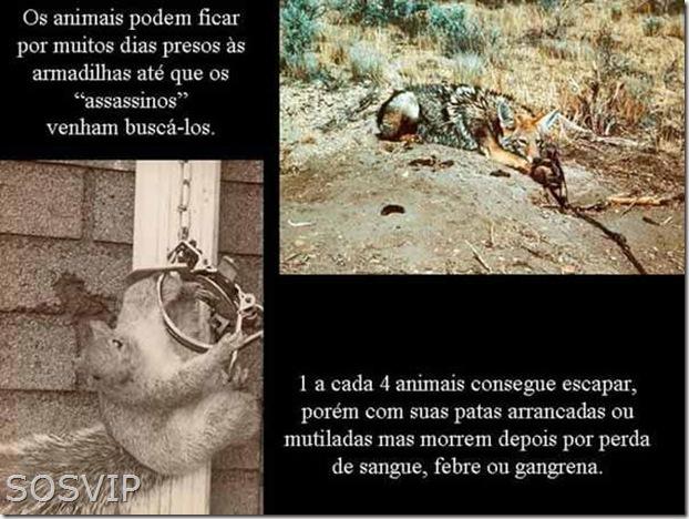 Maus tratos animais (1)