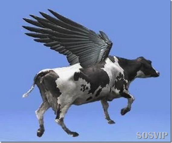 Vaca_voadora2