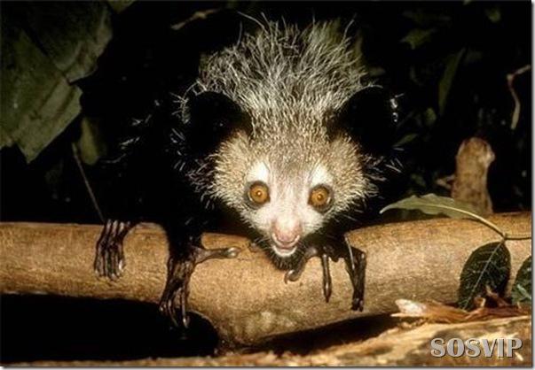 Animais estranhos criaturas awful-creatures.jpg (1)