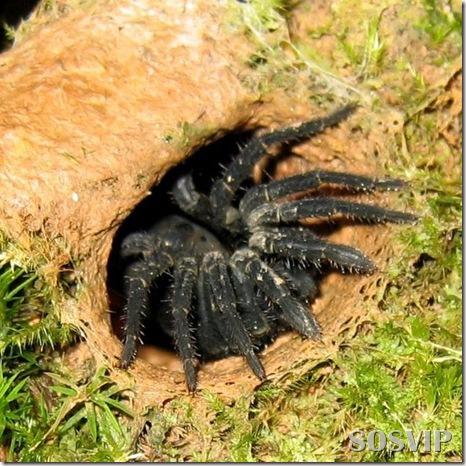Animais estranhos criaturas awful-creatures.jpg (40)