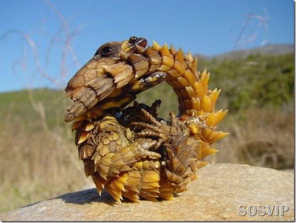 Animais estranhos criaturas awful-creatures.jpg (2)