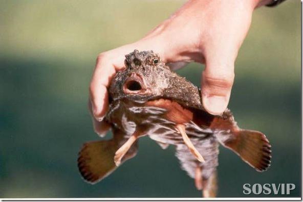 Animais estranhos criaturas awful-creatures.jpg (11)