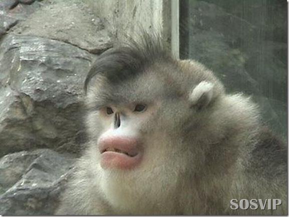 Animais estranhos criaturas awful-creatures.jpg (35)